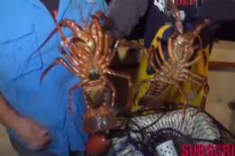 lobster blog