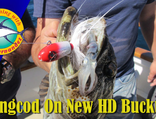Lingcod on the New HD B52 Bucktail Jig