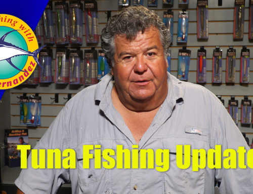 Tuna Fishing Update