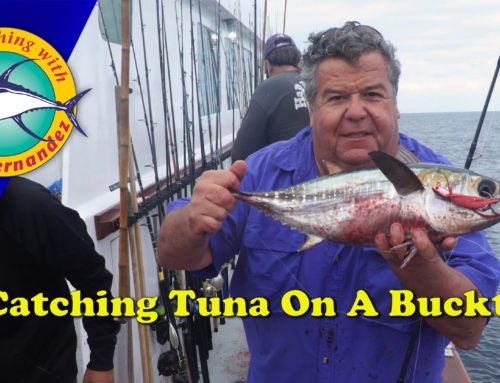 Catching Tuna On A New HD B52 Bucktail Jig