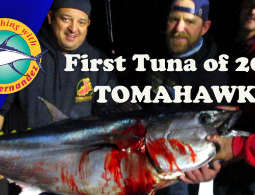 First Tuna for 2020 Landed!